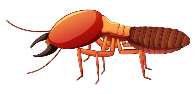 Termite on white Free Vector