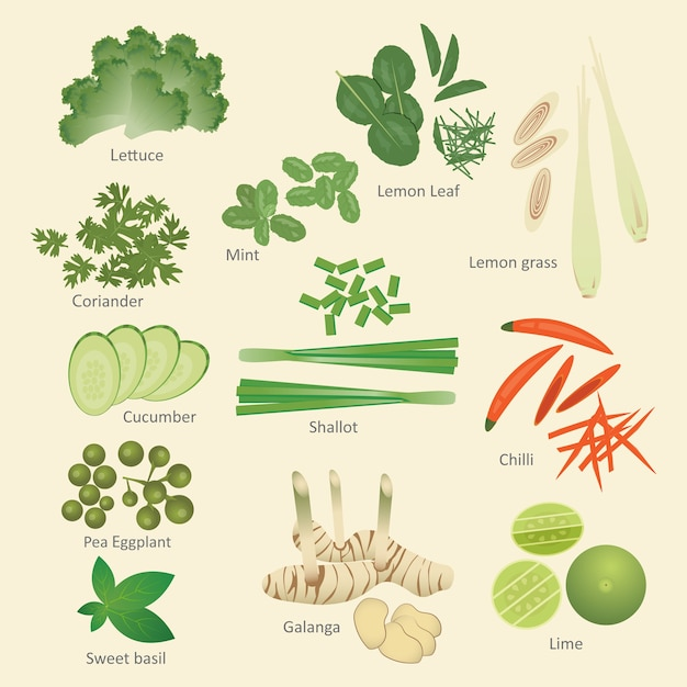 Thai food ingredients Premium Vector