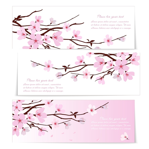 Three banners with fresh pink ornamental sakura flowers or cherry blossom Free Vector