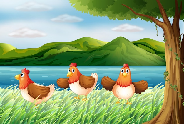 The three chickens at the riverbank Free Vector
