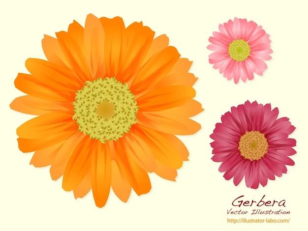 Three colors summer flowers