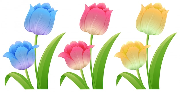 Three different colors of tulips Free Vector