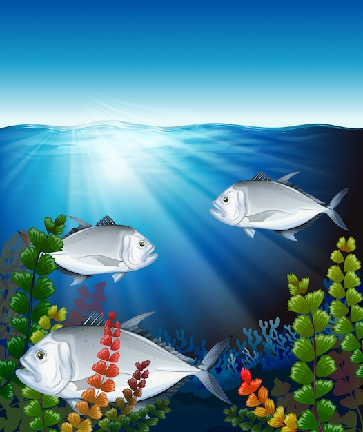 Three fish swimming in the ocean Free Vector