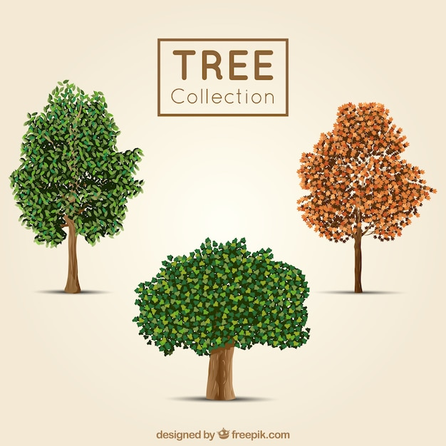 Three trees in realistic style Free Vector