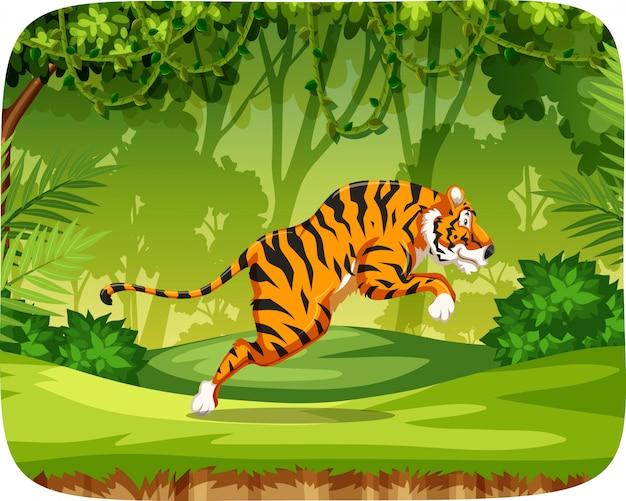 Tiger in jungle scene Free Vector