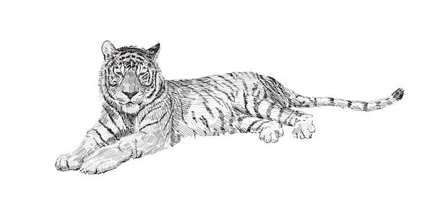 The tiger lies Premium Vector