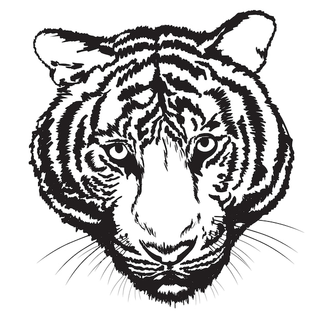 Tiger sketch free hand with digital brush Premium Vector