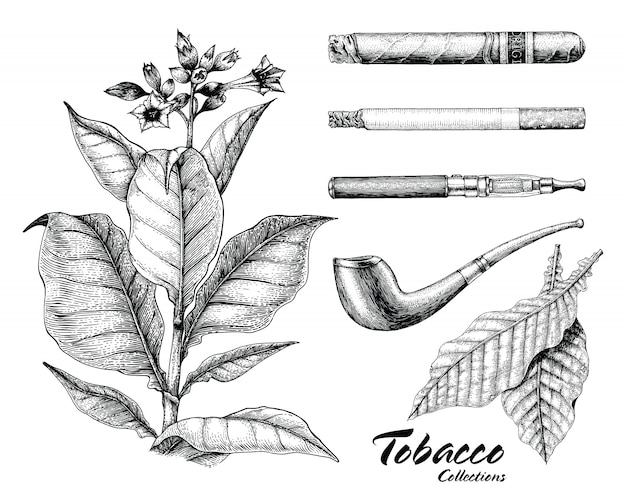 Tobacco collection hand drawing vintage style Premium Vector