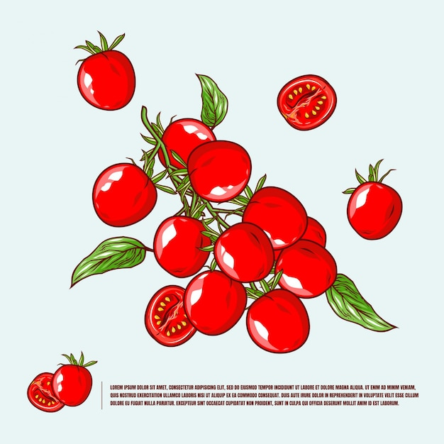 Tomato cherry illustration premium Premium Vector