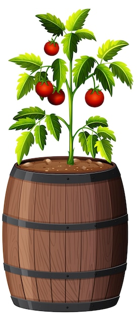 흰색 배경에 고립 된 나무 냄비에 토마토 공장 무료 벡터