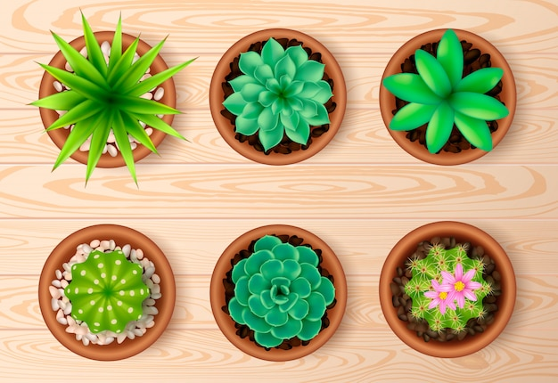 Top view plant on wooden table set Free Vector