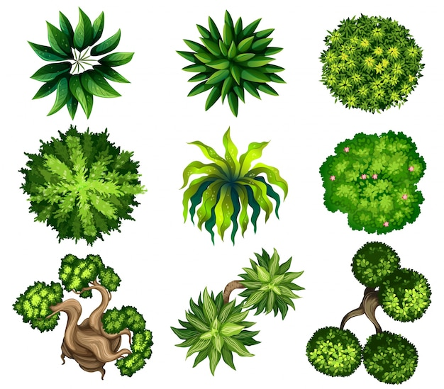 Topview Of The Different Plants Free Vector