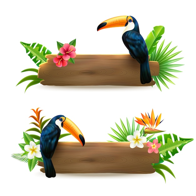 Banner di foresta pluviale tropicale tucano Vettore gratuito