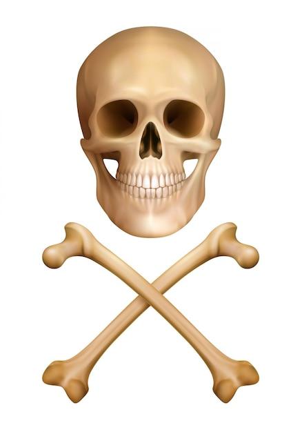 人間の頭蓋骨と交差した骨の現実的なスタイルの危険概念の伝統的な警告 無料ベクター