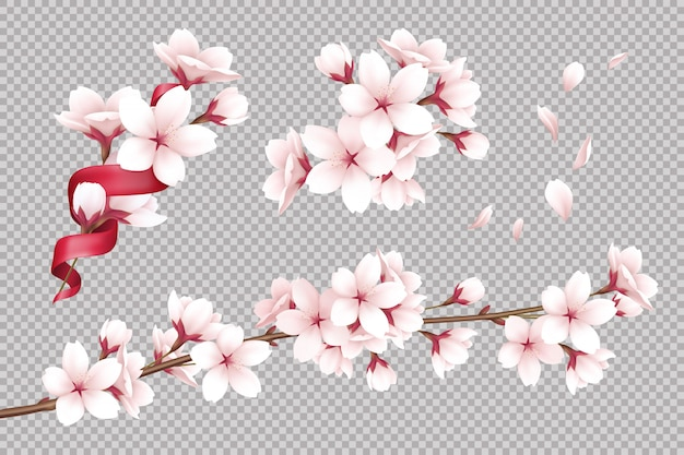 Transparent realistic blooming cherry flowers and petals illustration Free Vector