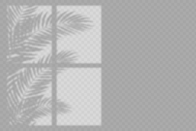 Transparent shadows overlay effect with leaves and window Free Vector