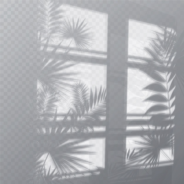 Transparent shadows overlay effect with plants and window Free Vector