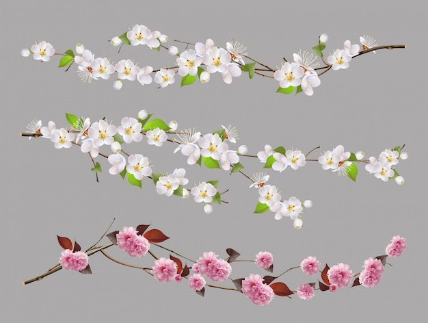 Tree branch, spring flowers 3d  set Premium Vector