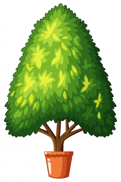 Tree growing in the pot Free Vector