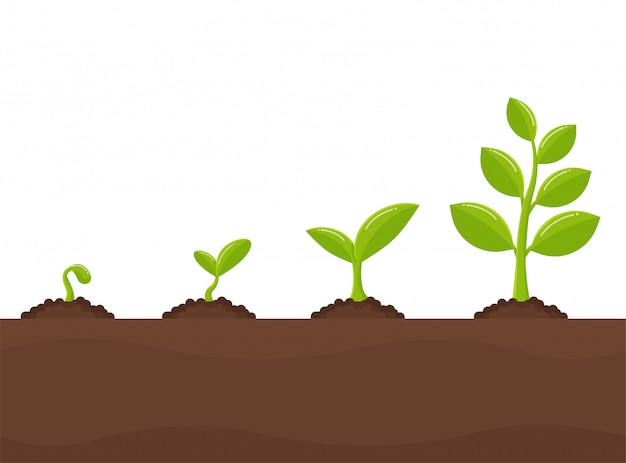 Tree growth planting trees that sprout from seeds become a big seedling. Premium Vector