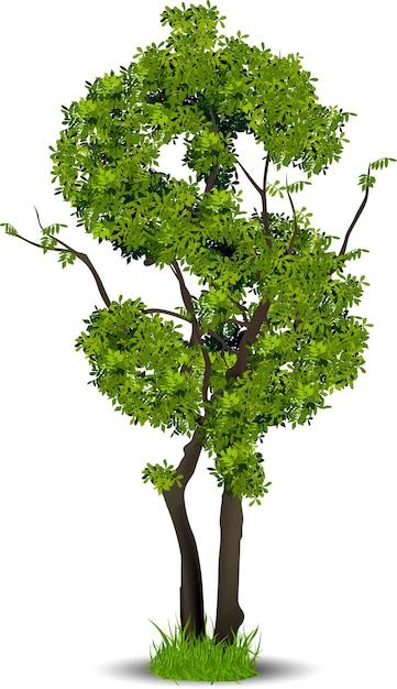 Tree leaf of money Premium Vector