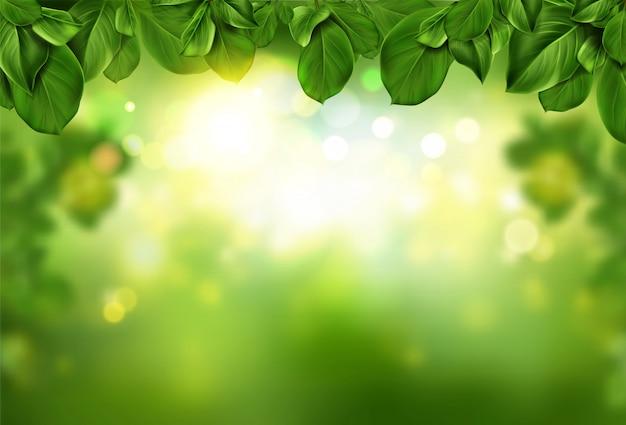 木は日光に照らされた柔らかい光の輝きに照らされた緑の抽象的なボケ味の境界線を残します。 無料ベクター