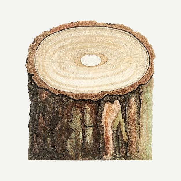 Tronco d'albero Vettore gratuito