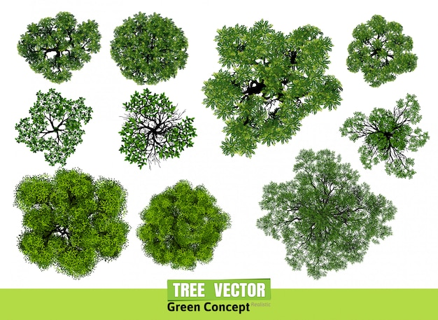 Tree top view from realistic Premium Vector