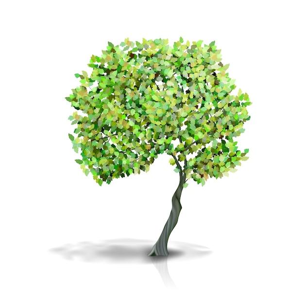 白い背景で隔離の緑の葉を持つ木 無料ベクター