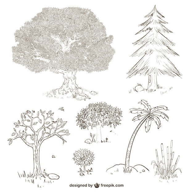 how to draw plants and trees
