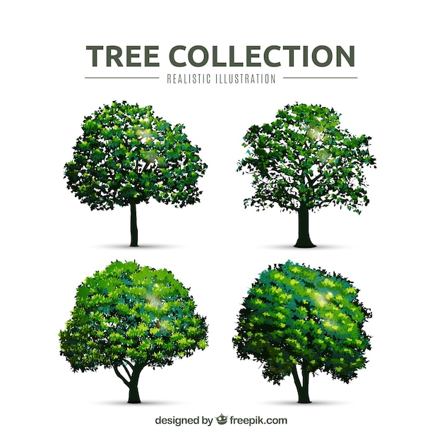 Trees collection in realistic style  Free Vector