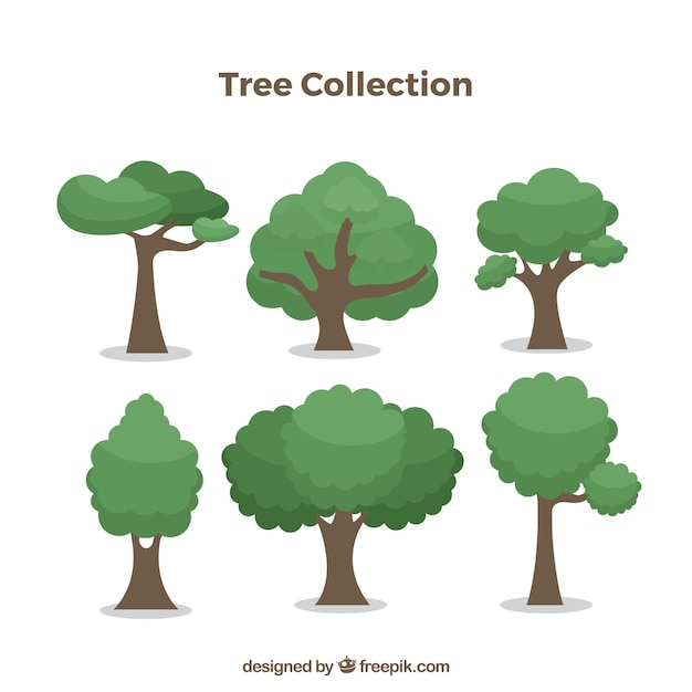 Trees collection with different species Free Vector
