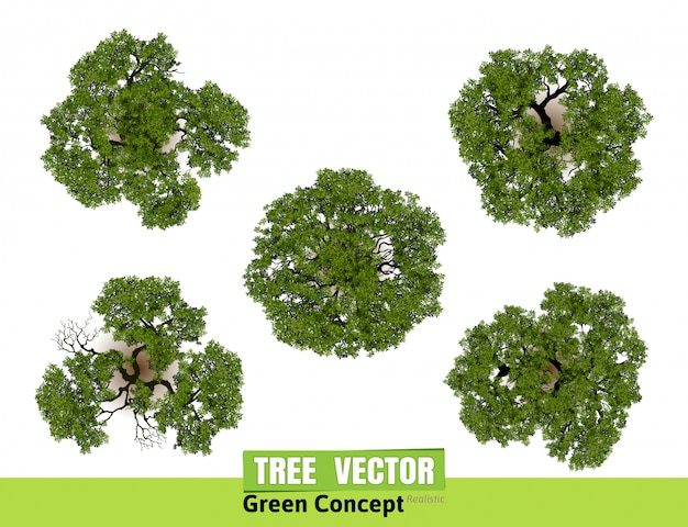 Trees top view for landscape vector illustration  Vector