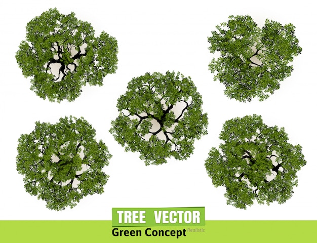 Trees top view for landscape vector illustration  Vector | Premium