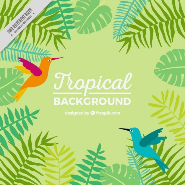 Tropical background with exotic birds