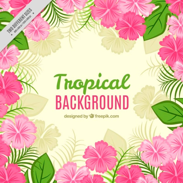 Tropical background with pink flowers and\ leaves