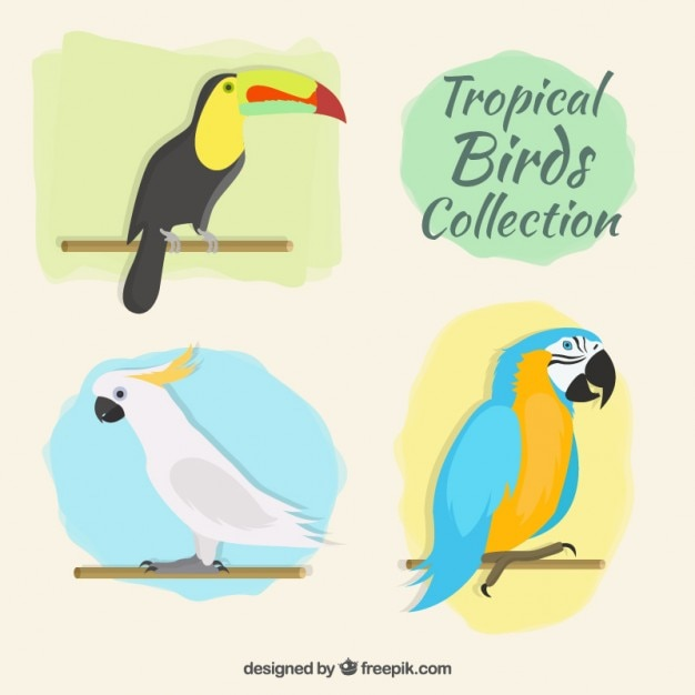 Tropical bird collection