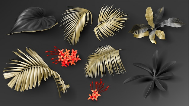 Tropical black and gold leaves set Free Vector