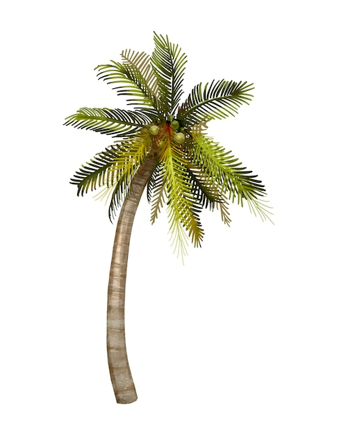 Tropical coconut palm tree illustration Free Vector