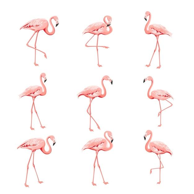 Тропическая коллекция розовых фламинго Бесплатные векторы