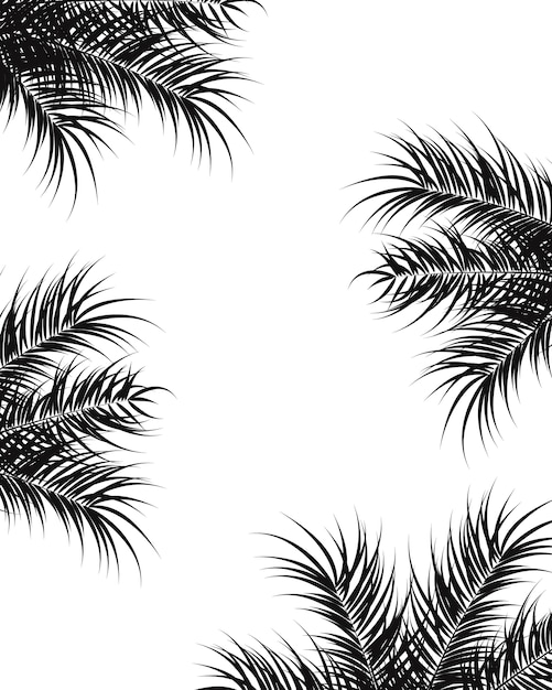 Gentil Tropical Design With Black Palm Leaves And Plants On White Background