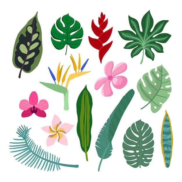 열 대 꽃과 잎 컬렉션 스타일 무료 벡터