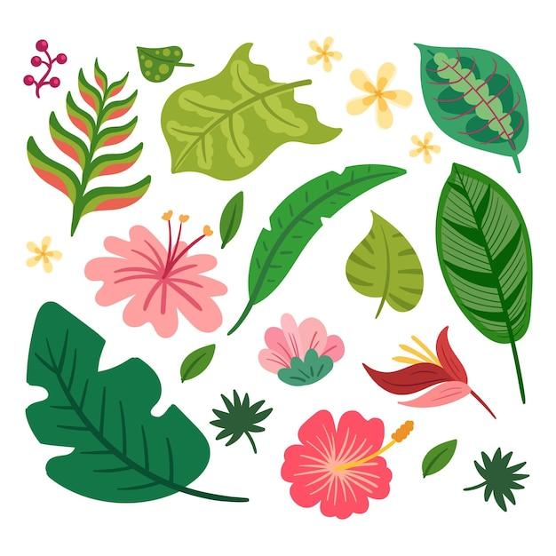 열 대 꽃과 잎 컬렉션 무료 벡터