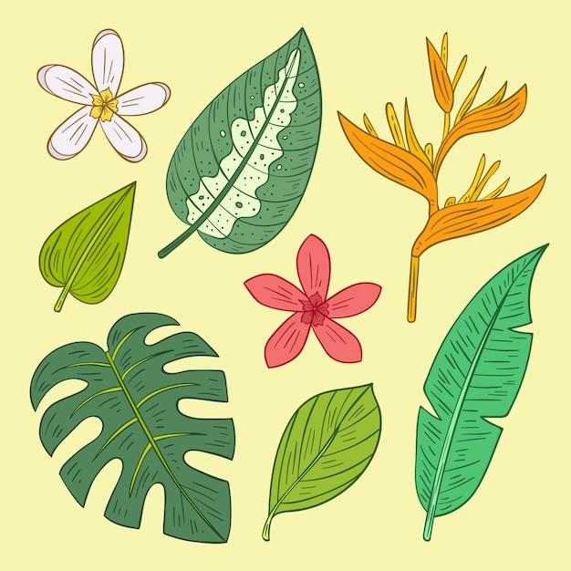Collezione di fiori e foglie tropicali Vettore gratuito
