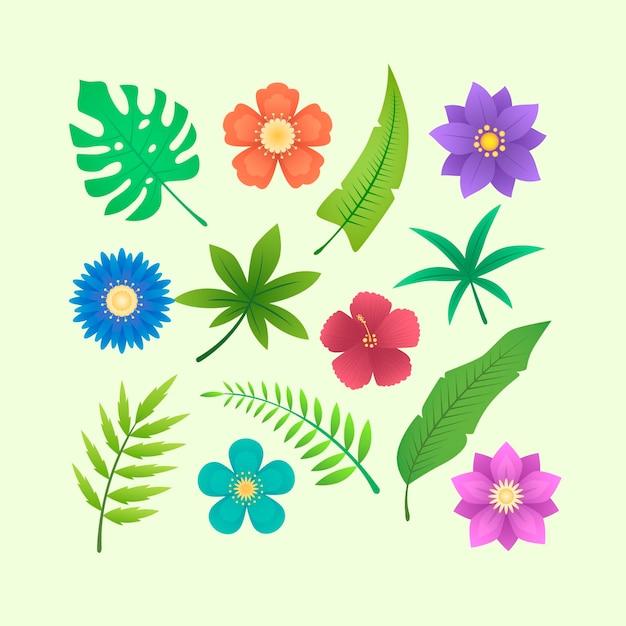 열 대 꽃과 나뭇잎 컬렉션 무료 벡터