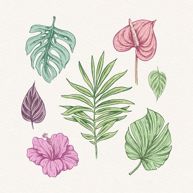熱帯の花と葉のセット 無料ベクター