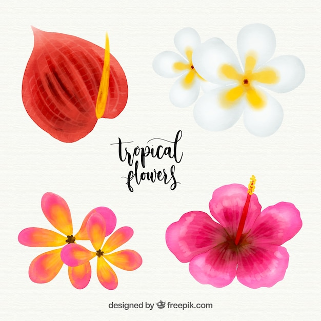Tropical flowers collection in watercolor\ style