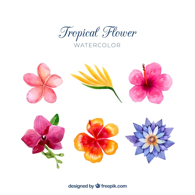 Tropical flowers collection