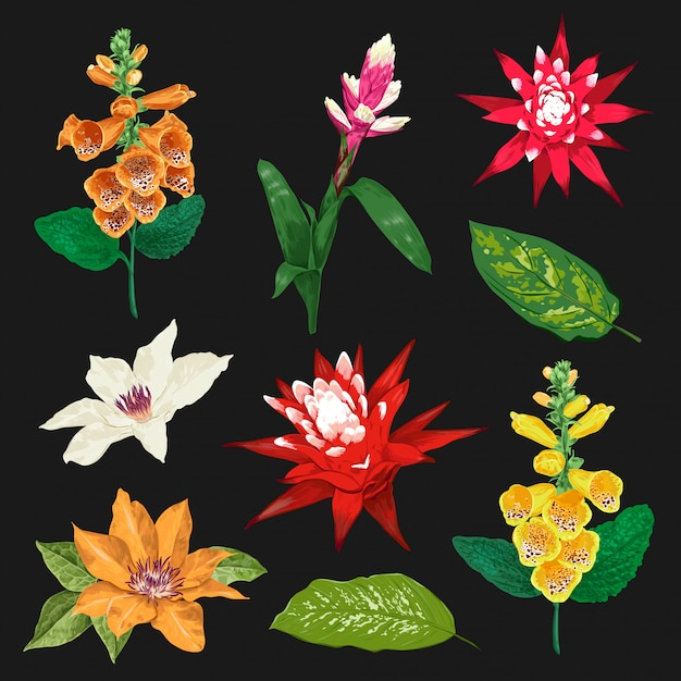 Tropical flowers and leaves set. exotic floral collection. botanical design Premium Vector