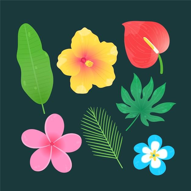 Set di fiori e foglie tropicali Vettore gratuito